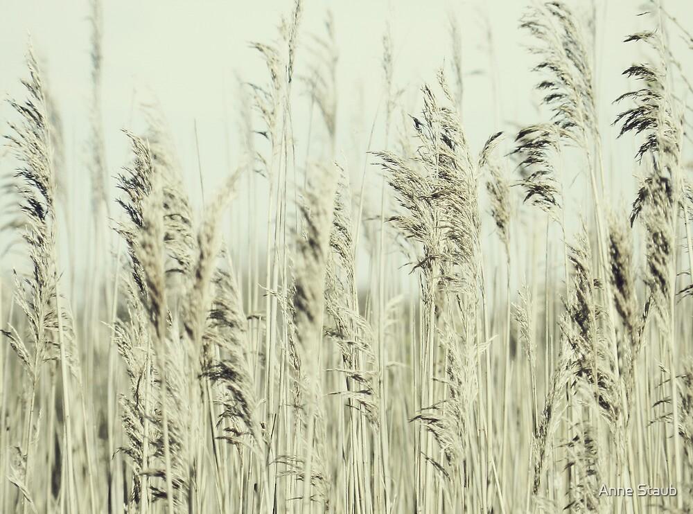 Summer whisper by Anne Staub