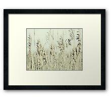 Summer whisper Framed Print