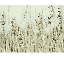 Summer whisper Photographic Print