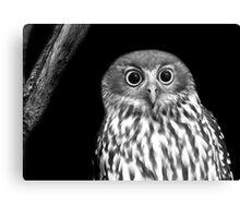Boobook Owl Canvas Print