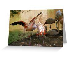 Flamingo Dispute Greeting Card