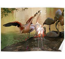 Flamingo Dispute Poster