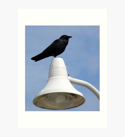 What Are You Crowing About Art Print