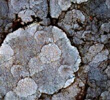 Strikin' Lichen Sticker
