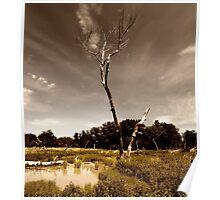 Cottonwoods Poster