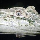 Leucistic Alligator by Megan Evorik
