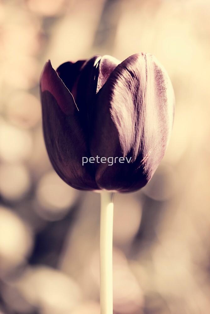 Day 295 - 30th April 2012 by petegrev