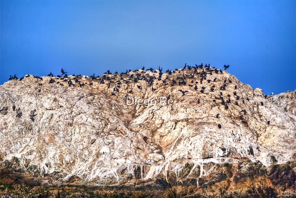 Bird Rock by Diego Re