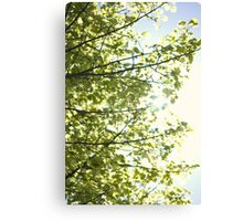 Day 296 - 1st May 2012 Canvas Print