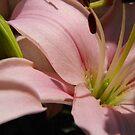 Lucious  Little Lilies by WildestArt