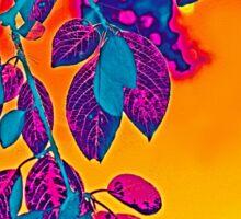 Sunglow Sticker