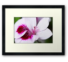 Violet and indigo Framed Print