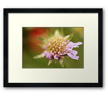 Webbed flower Framed Print