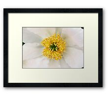 White and yellow  Framed Print