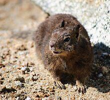 Ground Beach Squirrel by Agro Films