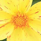 Yellow flower by jamesnortondslr