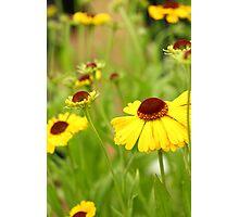 Yellow flowered field Photographic Print
