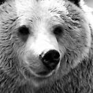 Brown Bear in Black 'n' White. by dgscotland