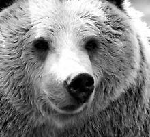 Brown Bear in Black 'n' White. by dgscotland