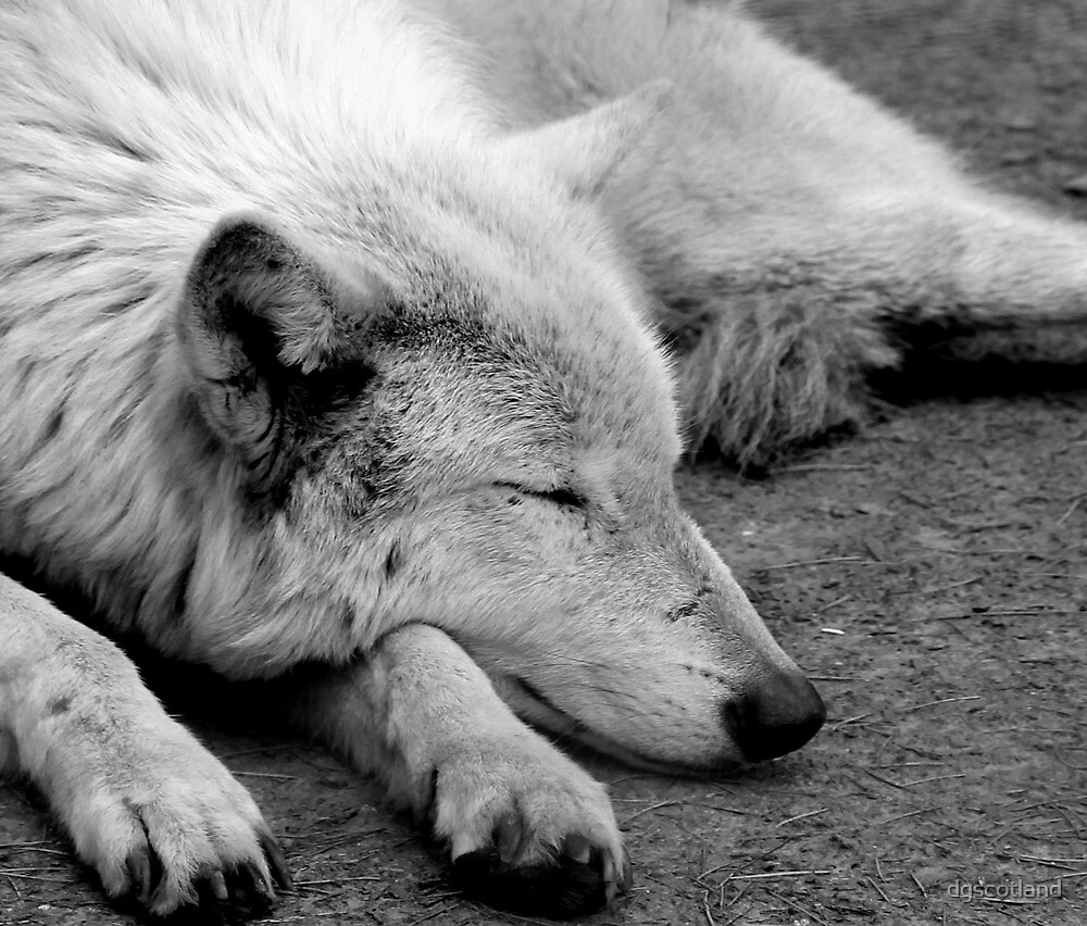 Do Wolves dream in colour ? by dgscotland