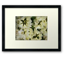 Rhododendron pale yellow Framed Print