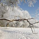 Snow and Branches by TesniJade
