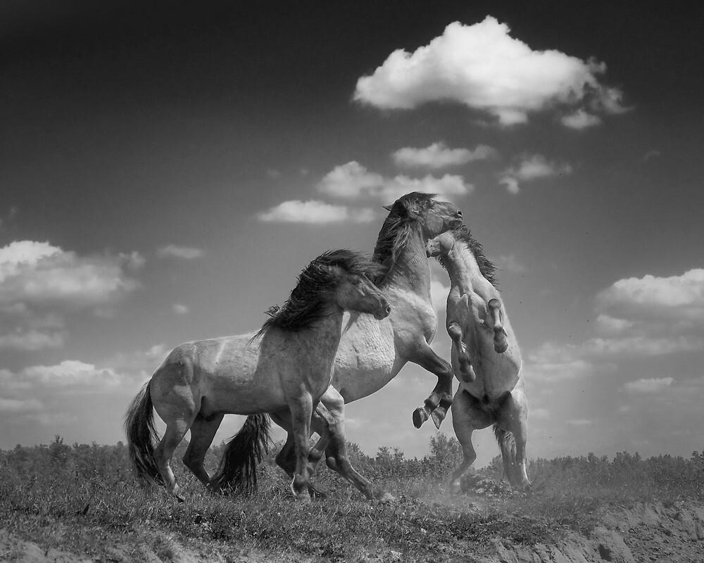 Wild Horses (1 of 2) by Henri Ton