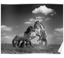 Wild Horses (1 of 2) Poster