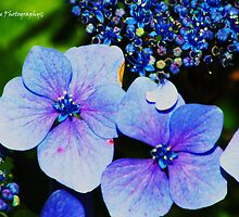 Blue Flowers by CandiceRose