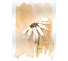 One White Daisy Poster