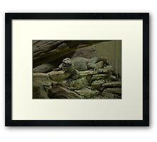 Rhinocerous Iguana Framed Print