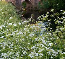 Alconbury Brook and Bridge by Melodee Scofield