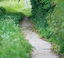 Footpath in England by Melodee Scofield