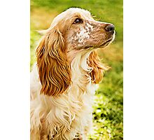 Kingsley Is A Kingly K9 Photographic Print