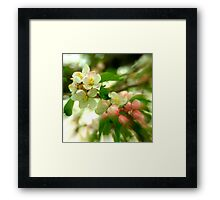 Apple Blooms.......... Framed Print