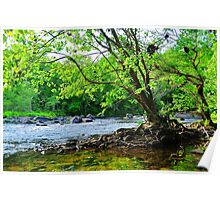 Tree on the River Bank Poster