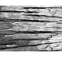 wood texture Photographic Print
