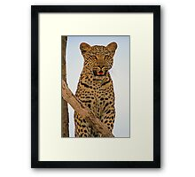 The face of mischief Framed Print