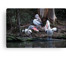 Pelican Chat Canvas Print