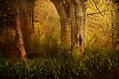 Into The Woods by KBritt