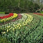 Arcs of Colour - Keukenhof Gardens by MidnightMelody