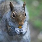 Western gray squirrel by Tori Snow