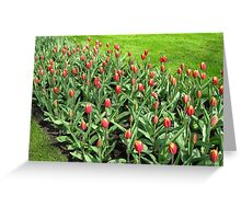 Hotheads - Fiery Young Tulips in the Keukenhof Gardens Greeting Card