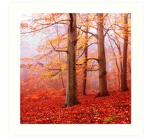 Burnham Beeches. November Art Print