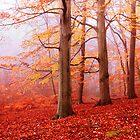 Burnham Beeches. November by Irina Chuckowree