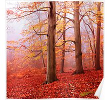Burnham Beeches. November Poster
