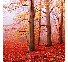 Burnham Beeches. November Photographic Print