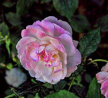 White Rose by Omar Dakhane