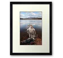 falcon perched on gloved hand with lake scene Framed Print