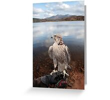 falcon perched on gloved hand with lake scene Greeting Card